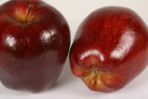 Яблоки ред делишес фото