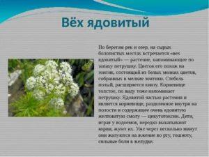 Ядовитые растения владимирской области