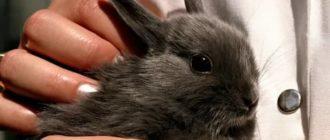 К чему снится кролик серый на руках