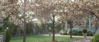 Ландшафтный дизайн вишневый сад