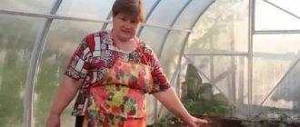 Юля минаева новые записи о посадке семян