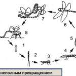 Как замаскировать сетку рабицу на даче