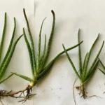 Травяной чай для подкормки растений