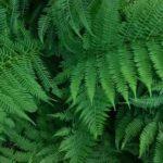 Вред причиняемый сорными растениями