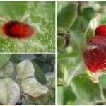 Как выращивать улиток ахатин в домашних условиях