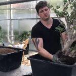 Где растет карликовая ива
