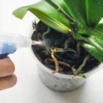 Можно ли имбирь при грудном вскармливании комаровский