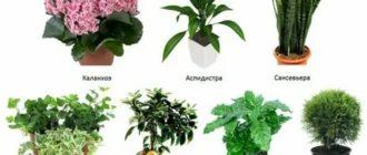 Определить комнатное растение по фотографии