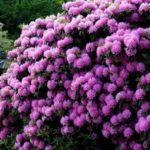 Осенние цветники названия и фото