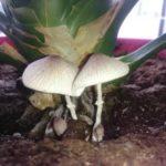 Котлеты из чечевицы с грибами