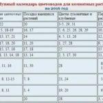 Рецепты заготовок на зиму из баклажанов вкусные