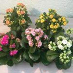 Цветы для водных пчел