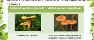 Чем отличаются съедобные грибы от несъедобных