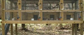 Как выращивать перепелов на даче