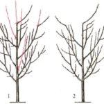 Чем отличаются пластинчатые грибы связаны с деревом