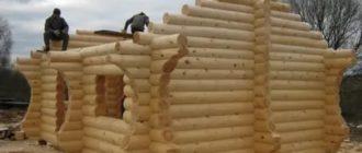 Из какой породы дерева лучше строить баню