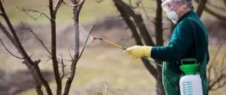 Чем опрыскать садовые деревья осенью