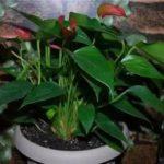 Как развести орхидею в домашних условиях видео