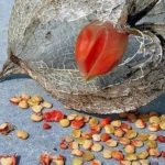 Консервированный чеснок рецепт на зиму