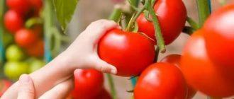 К чему снятся красные помидоры женщине незамужней