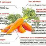 Подкормка жимолости осенью удобрениями