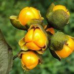 Соус из авокадо рецепт в домашних условиях