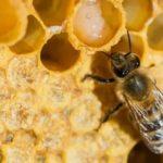 Зимний гриб фото и описание