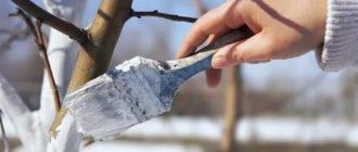 Чем побелить деревья на зиму