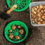 Чем заменить грибы шиитаке