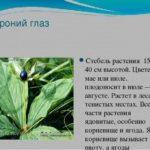 Дикорастущие растения красноярского края