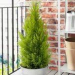 Как рассадить кактусы в домашних условиях
