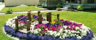Цветы для посадки во дворе